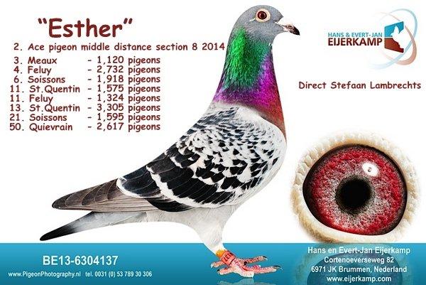 3, 4, 5 Isnes tegen 2.120 duiven
