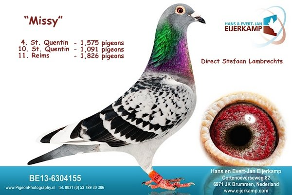 Reims 60% prijs en 10 bij de eerste 70 tegen bijna 6000 duiven in de Regio