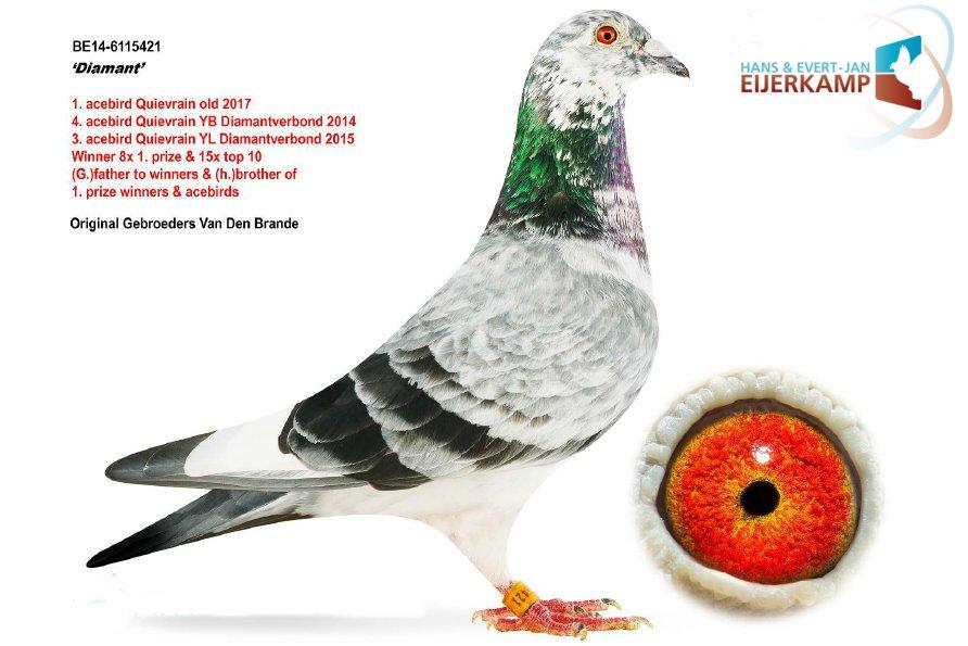 Again transfer of two super pigeons to Hans and Evert Jan Eijerkamp