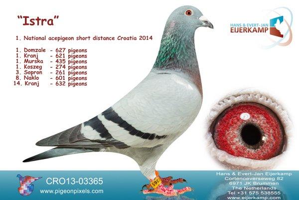 1, 3, 4, 11, 12, 14 enz Tongeren tegen 2.572 duiven. 36 bij de eerste 100.