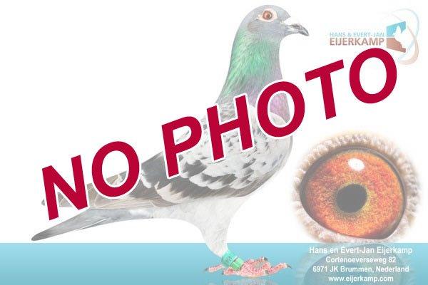 Duiven te koop zonder foto (Update 02-10)