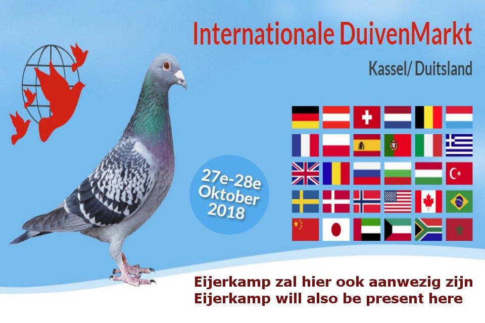Photo impression pigeon fair Kassel