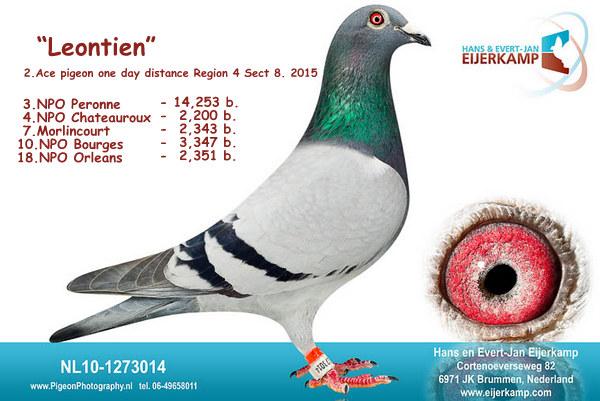 4, 5, 7, 9 NPO Chateauroux tegen 2.200 duiven