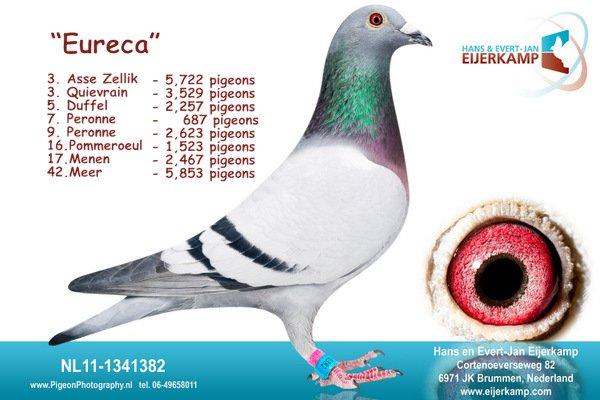 Eureca 3. Asse Zellik tegen 5.722 duiven 90% prijspercentage