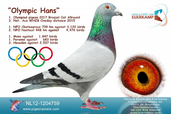 Olympic Hans 1st Olympiade pigeon Netherlands All-round moves to Eijerkamp