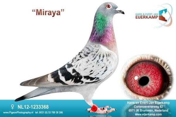Fille cherche pigeon
