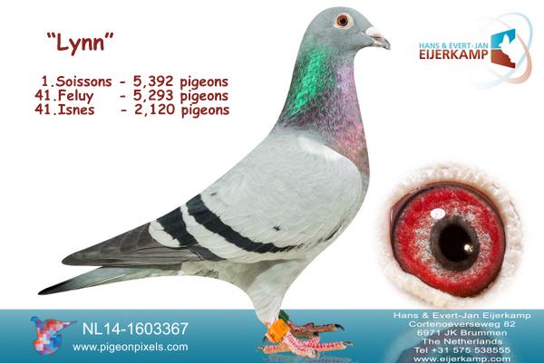 1 en 2 Teletekst vanuit Soissons en 1 en 2 tegen 8.508 duiven en 2 snelsten hele concours