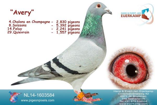 4 en 6 op Chalons en Champagne tegen 10.386 duiven, 13 bij de eerste 100, 64% prijs
