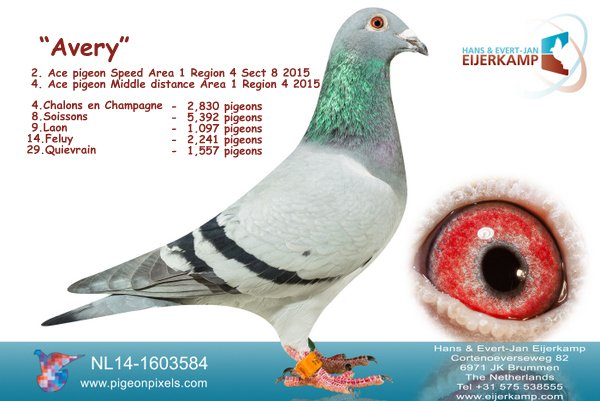 2, 5, 7, 9 etc. Menen against 3,151 pigeons and 80% prize