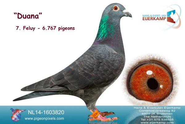 7e Feluy tegen 6.767 duiven en 7 bij de eerste 27