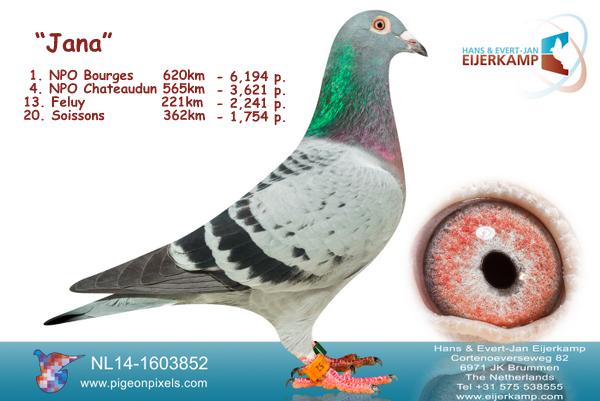 Voor de 3e keer in 11 jaar 1e NPO Bourges nu tegen 6.187 duiven - 60% prijs
