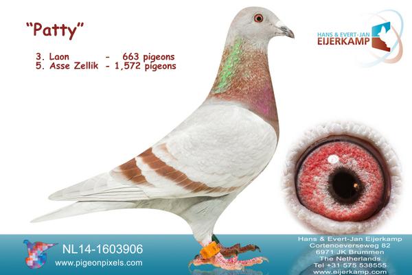 Patty 3e Laon tegen 663 duiven - 63% prijs