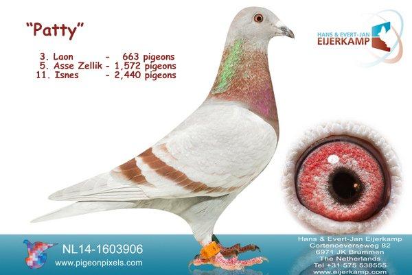 11. Isnes tegen 2.440 duiven - 89% prijs