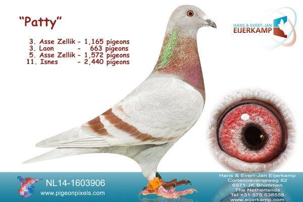 Patty 3rd from Asse Zellik against 1,165 pigeons � 54% prize in the Regio