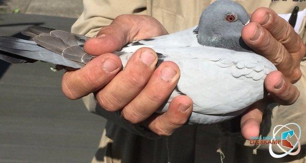1, 2, 5, 6 St.Quentin tegen 3.657 duiven