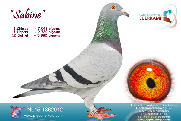 Eijerkamp pigeons once again prove their superior class with an unprecedented result.<br>1,2,4,5,20,31,34,49,55,62 etc. against  7,048 pigeons. Percentage 81%(1:4)<BR>1,2,4,5,7,10,12,15,17,19 etc against 2,066 pigeons. Percentage 78% (1:4)