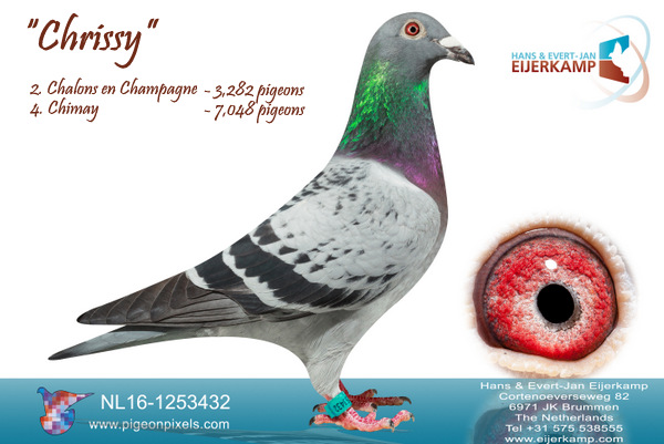 New super result from Chalons en Champagne prize percentage 66% (1:4)<br>21 prizes in the first 100 against 3,282 pigeons<br>2, 5, 6, 7, 8, 18, 19, 21, 28, 43, 44, 48 etc against 3,282 pigeons