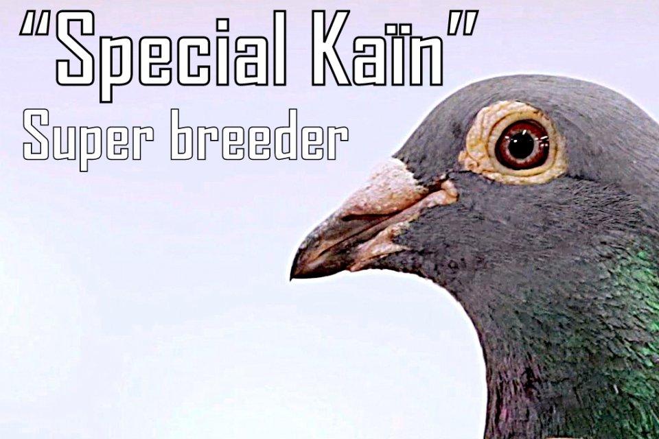 Presentation master breeder Special Kaïn
