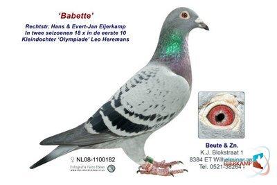 Beute NL08-1100182 Babette