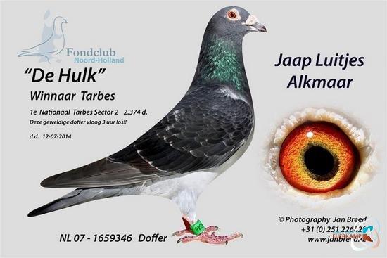 Jaap Luitjes, Alkmaar, winnaar duivenvoucher €500,= maand juli 2014