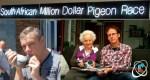 Eijerkamp duiven presteren optimaal in South African Million Dollar Race (UPDATE)