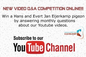 Questions about Youtube videos competition now online