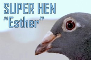SUPER HEN Esther presented
