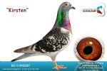 Racing pigeon for sale Kirsten