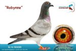 Racing pigeon for sale Robynne