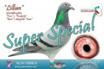 Racing pigeon for sale Lillian