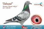 Racing pigeon for sale Edmund