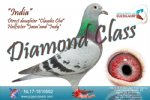 Racing pigeon for sale India