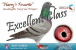 Racing pigeon for sale Harry's Favorite