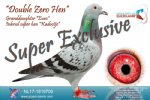 Racing pigeon for sale Double Zero Hen
