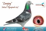 Racing pigeon for sale Lovejoy