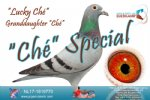 Racing pigeon for sale Lucky Ché