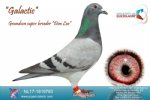 Racing pigeon for sale Galactic