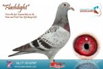 Racing pigeon for sale Flashlight