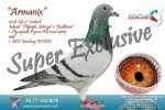 Racing pigeon for sale Armanix