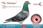 Racing pigeon for sale The Victorious