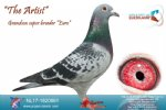 Racing pigeon for sale The Artist