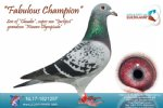 Racing pigeon for sale Fabulous Champion