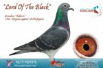 Racing pigeon for sale Lord Of The Black