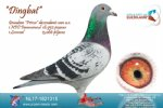 Racing pigeon for sale Dingbat