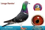 Racing pigeon for sale Jonge Rambo