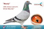 Racing pigeon for sale Moody