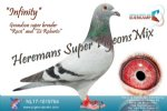 Racing pigeon for sale Infinity