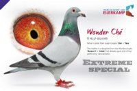 Racing pigeon for sale Wonder Ché