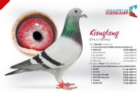 Racing pigeon for sale Xionglong